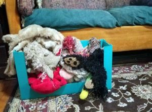 The Dogs Get a New Toybox